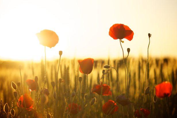 bloom-blossom-field-66274
